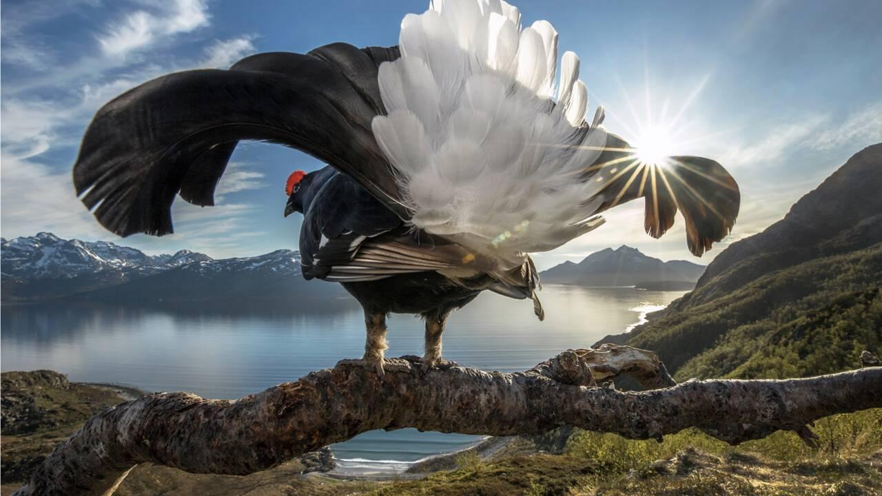 Les plus belles photos de faune sauvage et de nature récompensées par le concours Big Picture