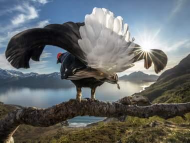 Nature et faune sauvage : les plus belles photos du concours Big Picture