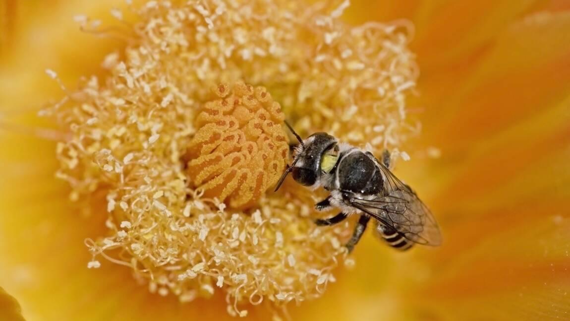 En Argentine, une abeille a fabriqué son nid entièrement avec des déchets plastique