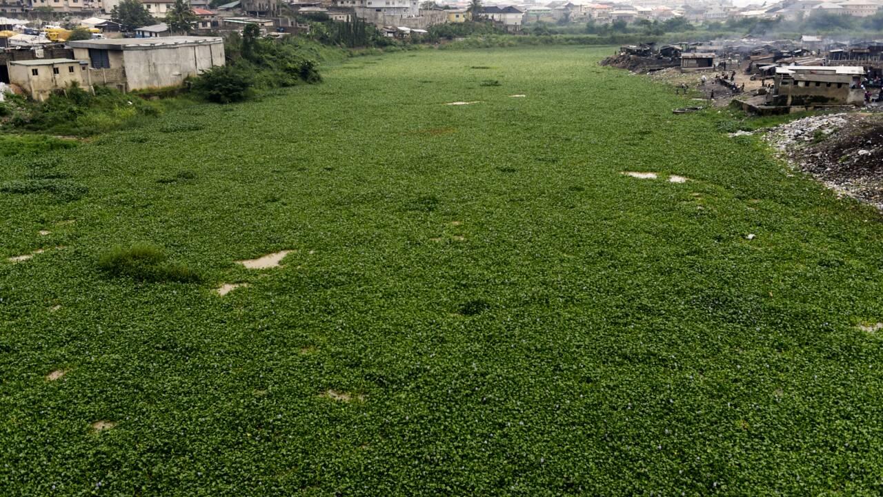 Les jacinthes d'eau envahissent Lagos, mégapole d'Afrique de l'Ouest