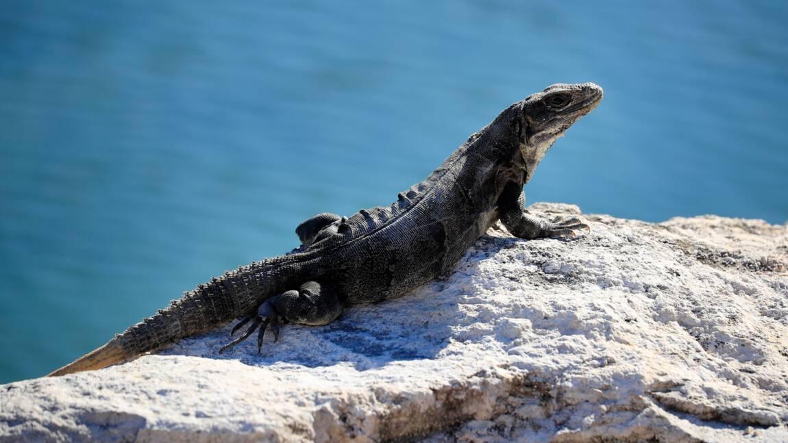 Europol : sauvetage de milliers de reptiles destinés à finir en sacs à main