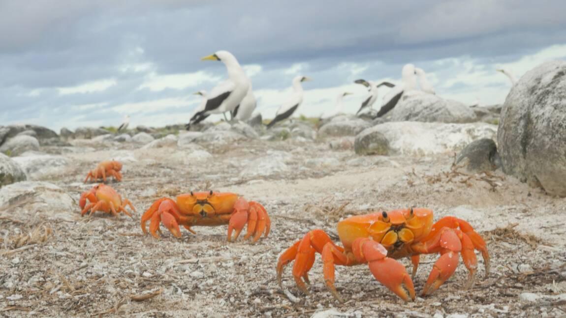Escale à Clipperton, l'atoll le plus isolé du monde