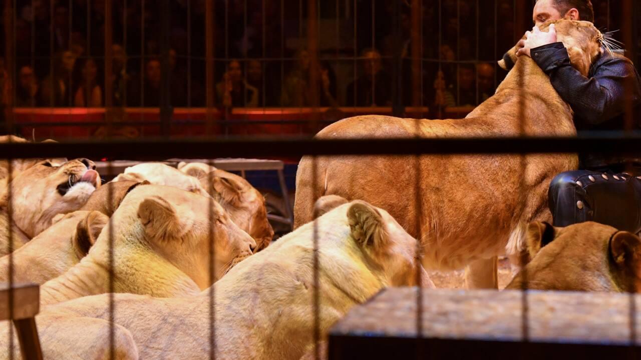 Une campagne d'affichage contre les cirques avec animaux sauvages dans le métro