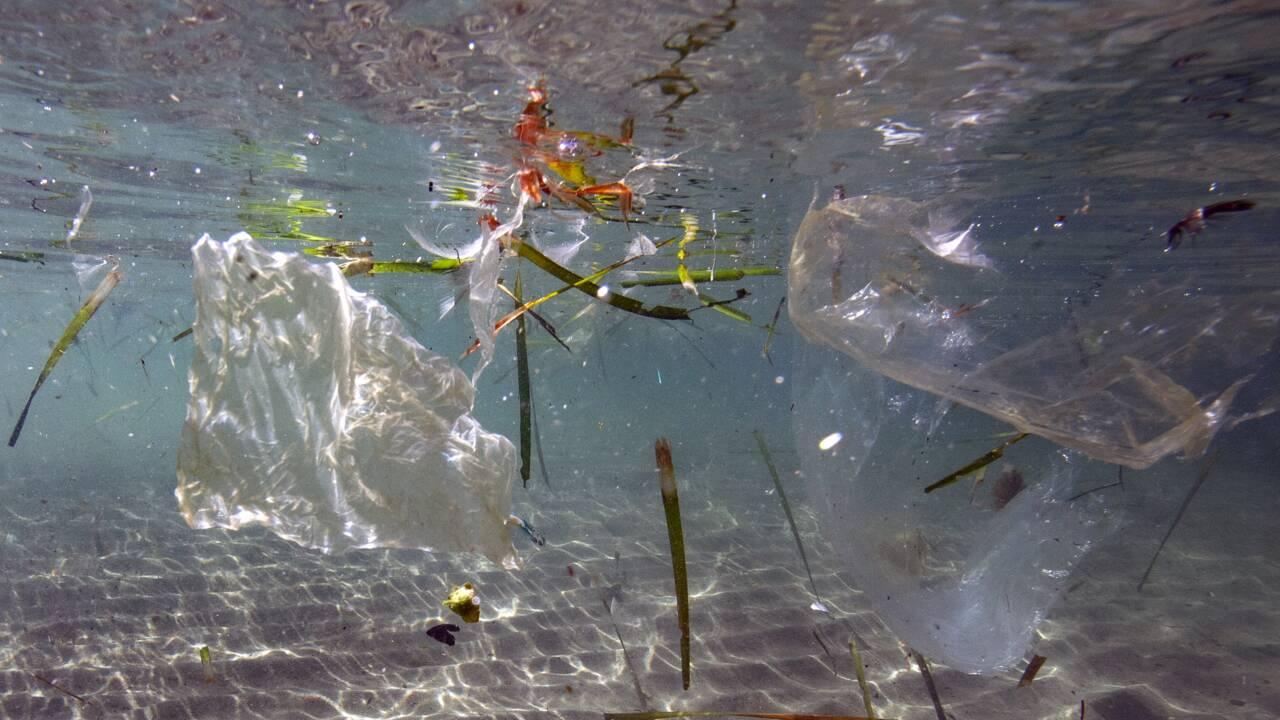 5 grammes de plastique ingérés par semaine: le gouvernement saisit l'Anses
