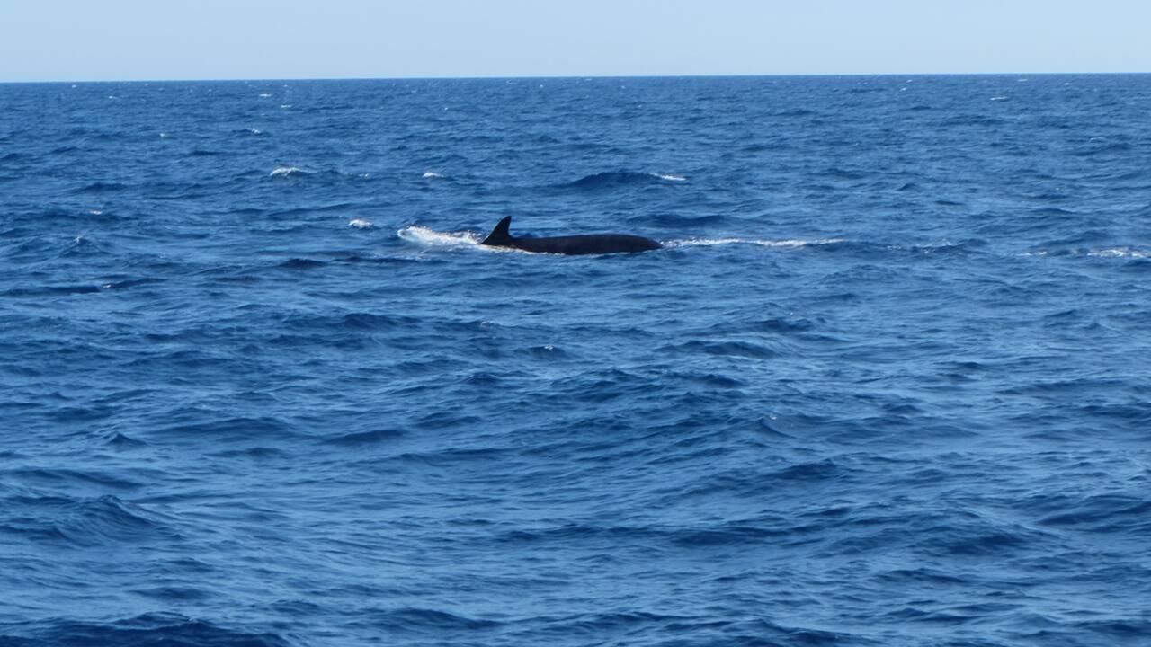 Du plastique partout, jusque dans le corps des baleines