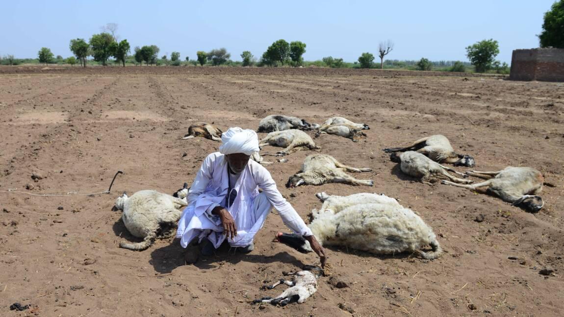 Chaleur extrême: près de 50 morts dans le nord de l'Inde