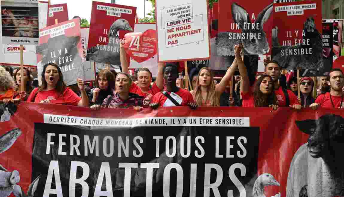 """""""Fermons les abattoirs!"""": défilé à Paris contre la maltraitance animale"""
