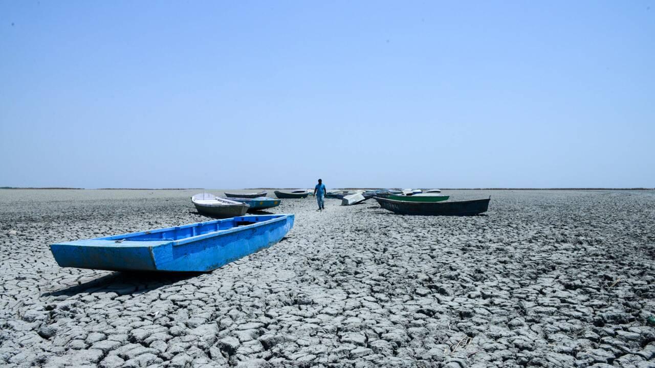 En Inde, la sécheresse provoque des comportements étranges chez les animaux