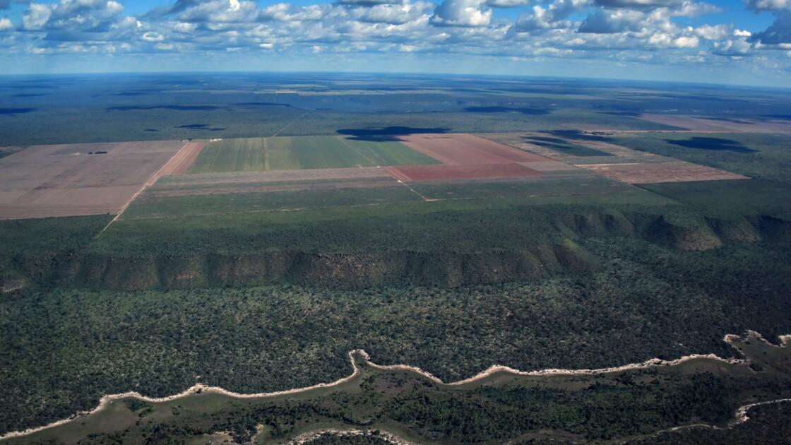 Déforestation + réchauffement: addition mortelle pour la vie sauvage