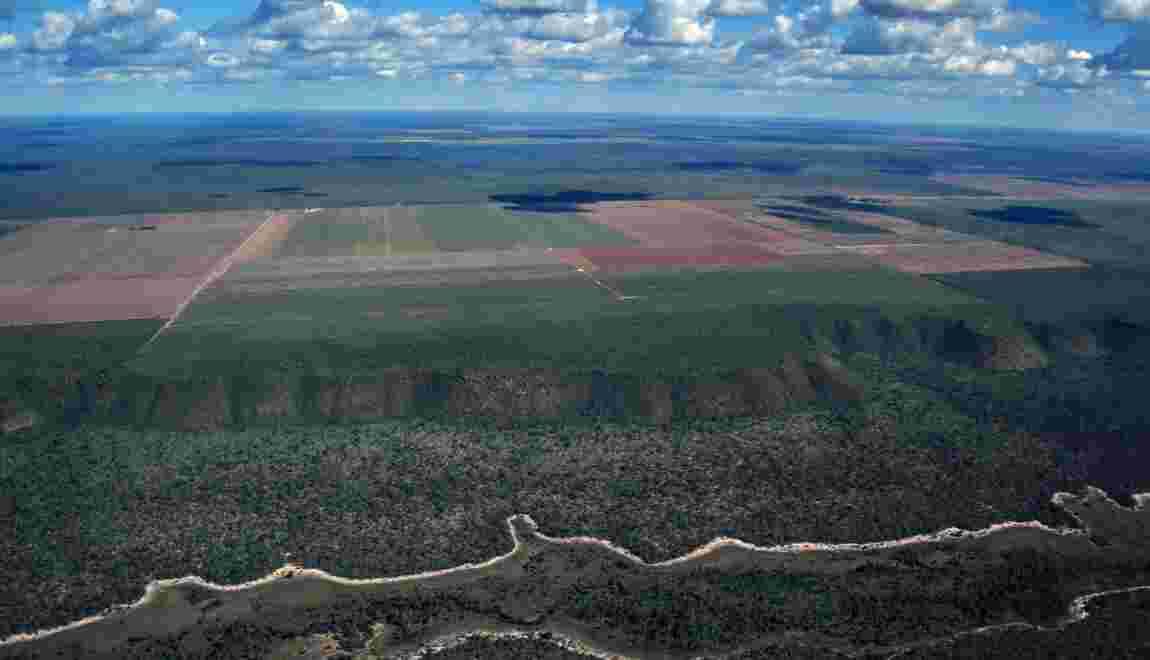 Au Brésil, les monocultures grignotent la savane et menacent les communautés