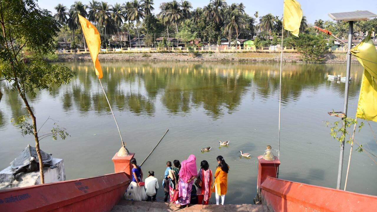 """Dans le bassin d'un temple indien, la survie de tortues """"éteintes"""""""