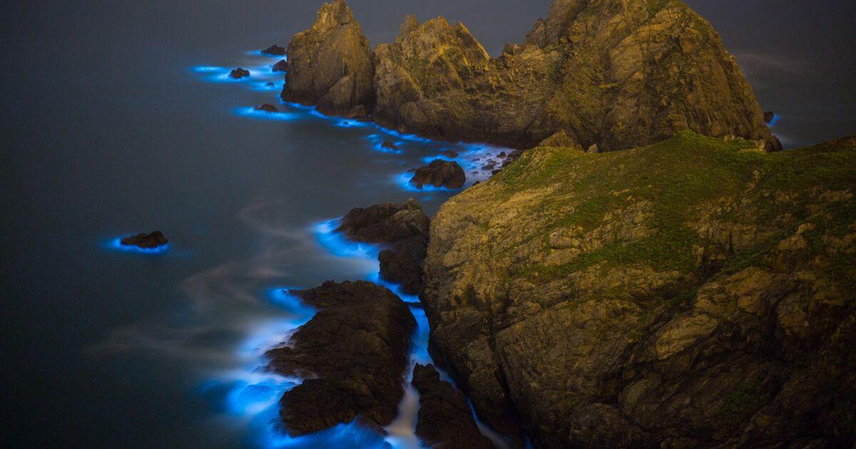 """Les """"Blue Tears"""", un phénomène splendide mais toxique qui prolifère en mer de Chine"""