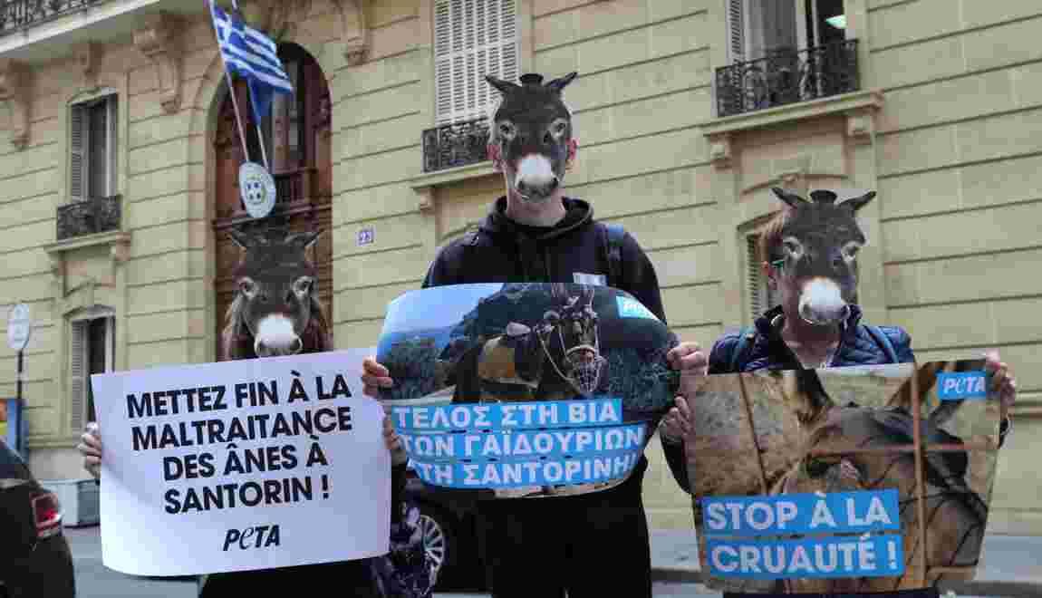 Des défenseurs des animaux contre l'exploitation des ânes de Santorin