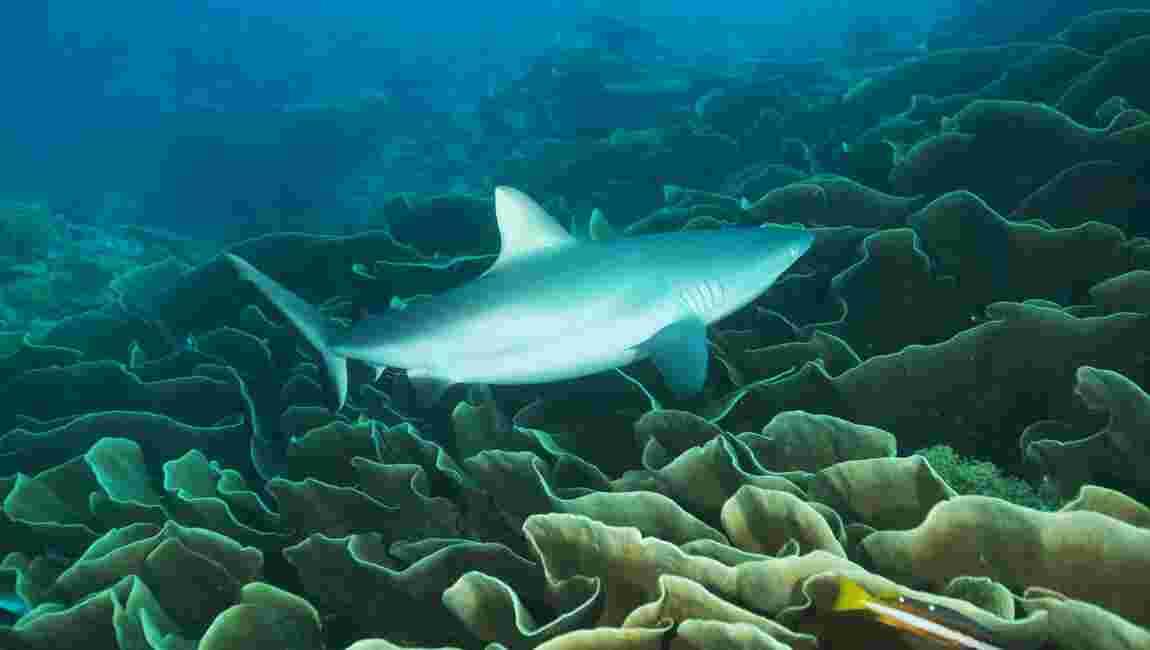 Les Palaos modifient leur projet de sanctuaire marin pour faire plaisir aux pêcheurs japonais