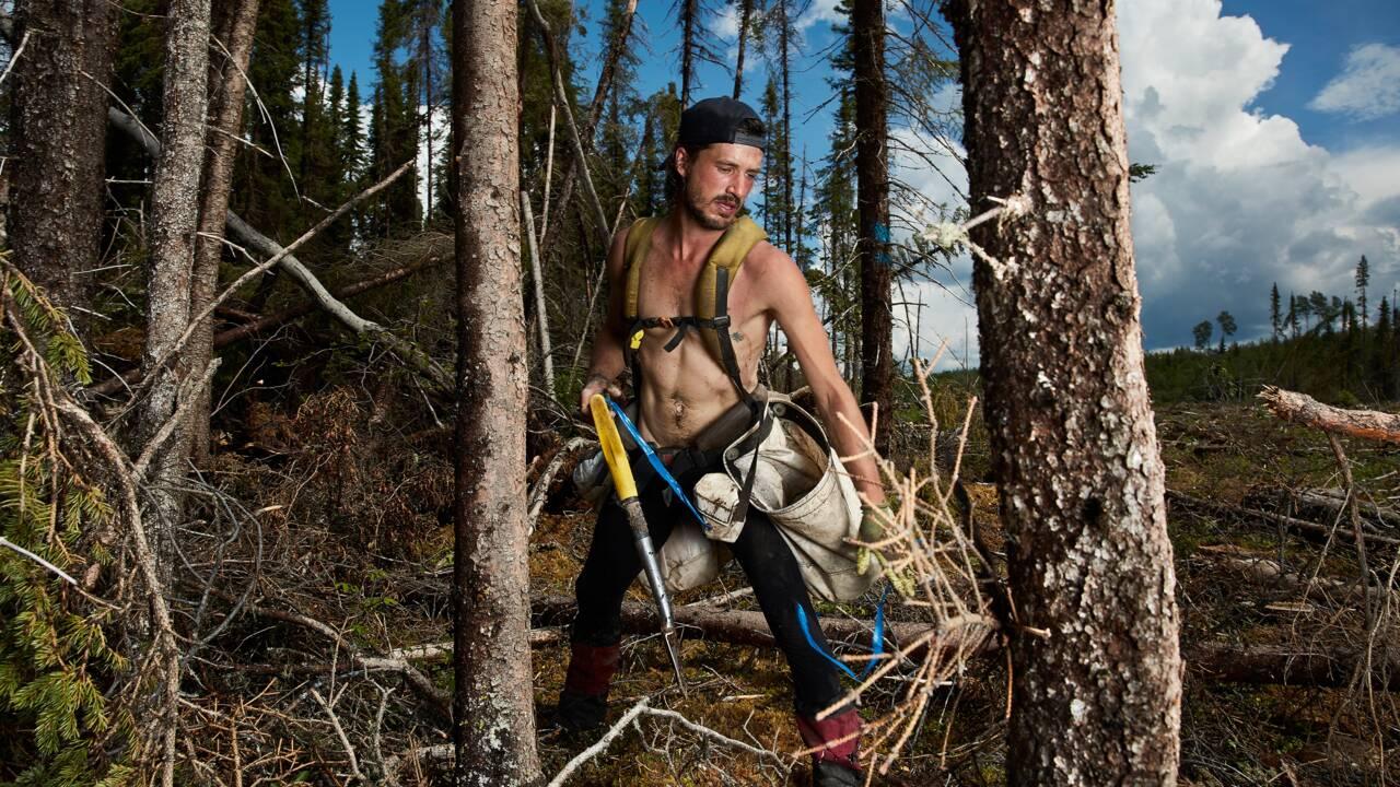 """Canada : qui sont les """"tree planters"""", ces héros qui plantent jusqu'à 6 000 arbres par jour ?"""