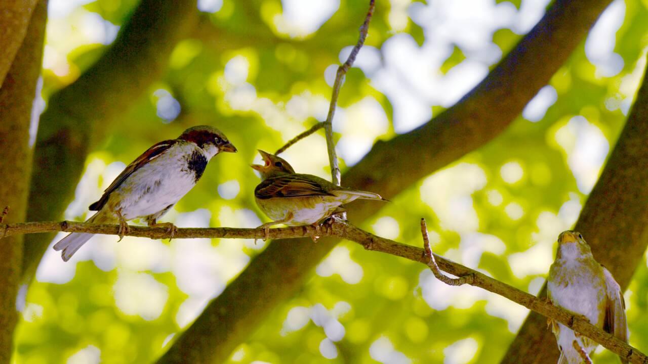 La nature, bouleversée par l'Homme, encore plus fragile en Ile-de-France