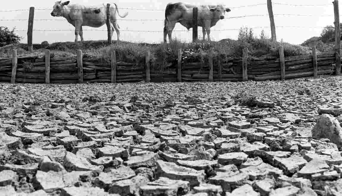 Les grandes vagues de chaleur en France depuis l'été 1976