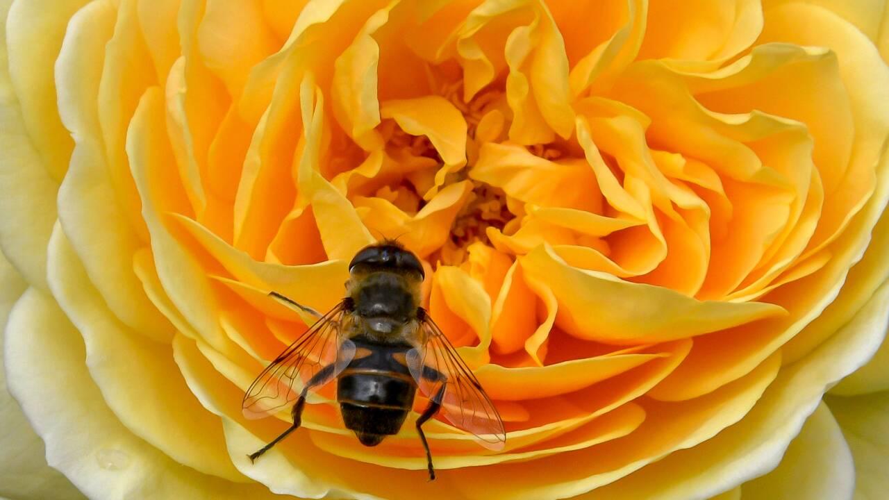 Gelées, froid, canicule... La récolte de miel en totale déconfiture