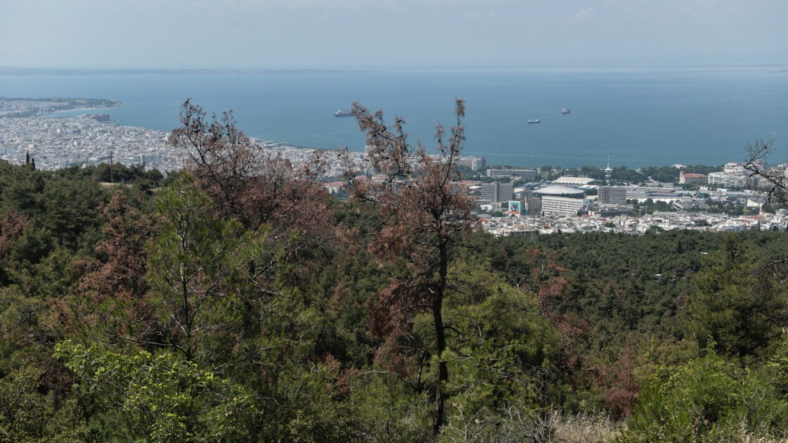 En Grèce, des popes vont bénir une forêt dévastée par un insecte