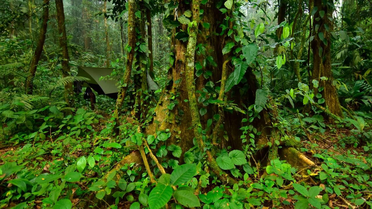 """Au Honduras, une """"cité perdue"""" abrite d'incroyables espèces que l'on pensait éteintes"""