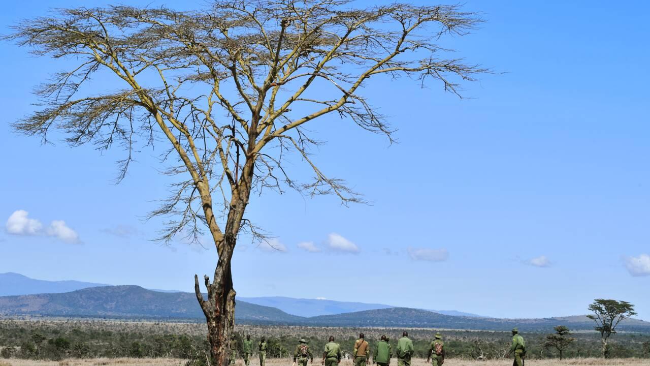 Au Kenya, la lutte contre le braconnage passe aussi par la high-tech