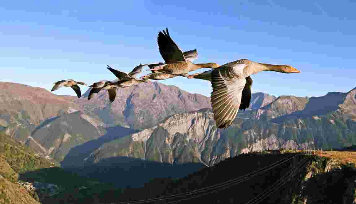 Auvergne : à Saint-Flour, dans le Cantal, planez avec les oiseaux migrateurs