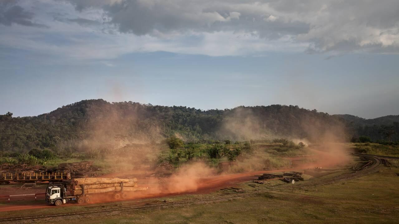 """Au Gabon, les forestiers éprouvés par le scandale du bois précieux """"kevazingo"""""""