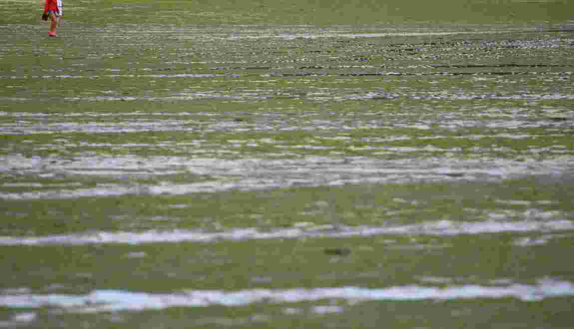 En Bretagne, le retour des algues vertes inquiète