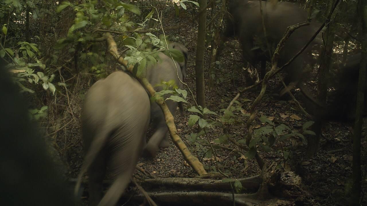 Les éléphants de Lagos, secret bien gardé du Nigeria
