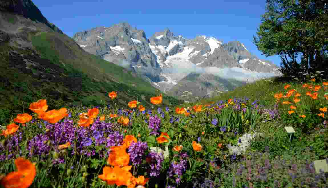 Hautes-Alpes : le jardin du Lautaret, un concentré de fleurs, de science et d'histoire