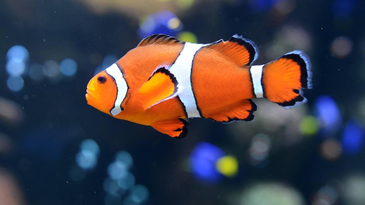Petit poisson n'éclora pas: la faute à la pollution lumineuse