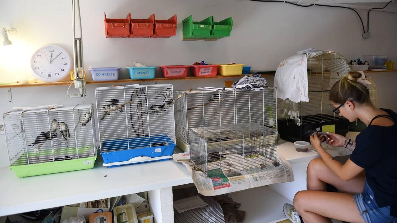 Dans l'Hérault, un hôpital prend soin des animaux victimes des fortes chaleurs