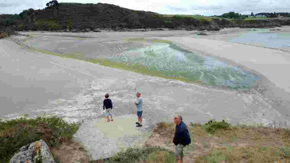 Algues vertes: des associations réclament un protocole en cas de décès