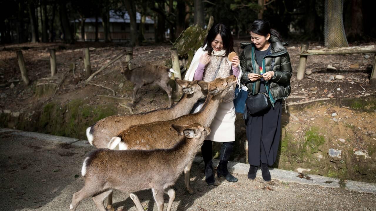 Japon: 9 daims d'un haut lieu touristique morts après avoir ingéré du plastique