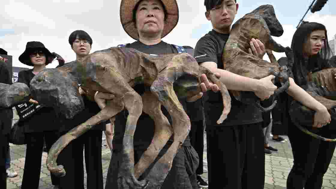 Viande de chien: pro et anti manifestent en Corée du Sud