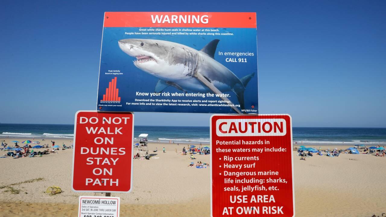 Cape Cod: ses plages, ses phoques... et ses requins