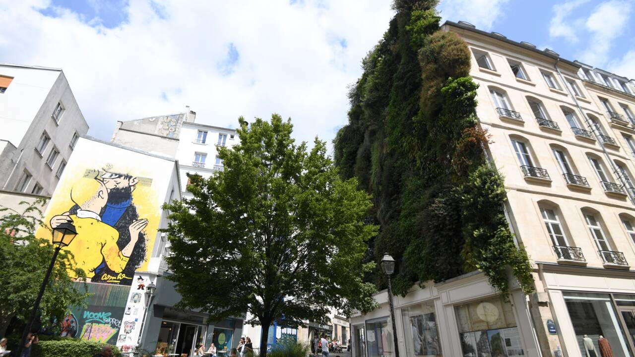 Des arbres pour sauver Paris du réchauffement ?