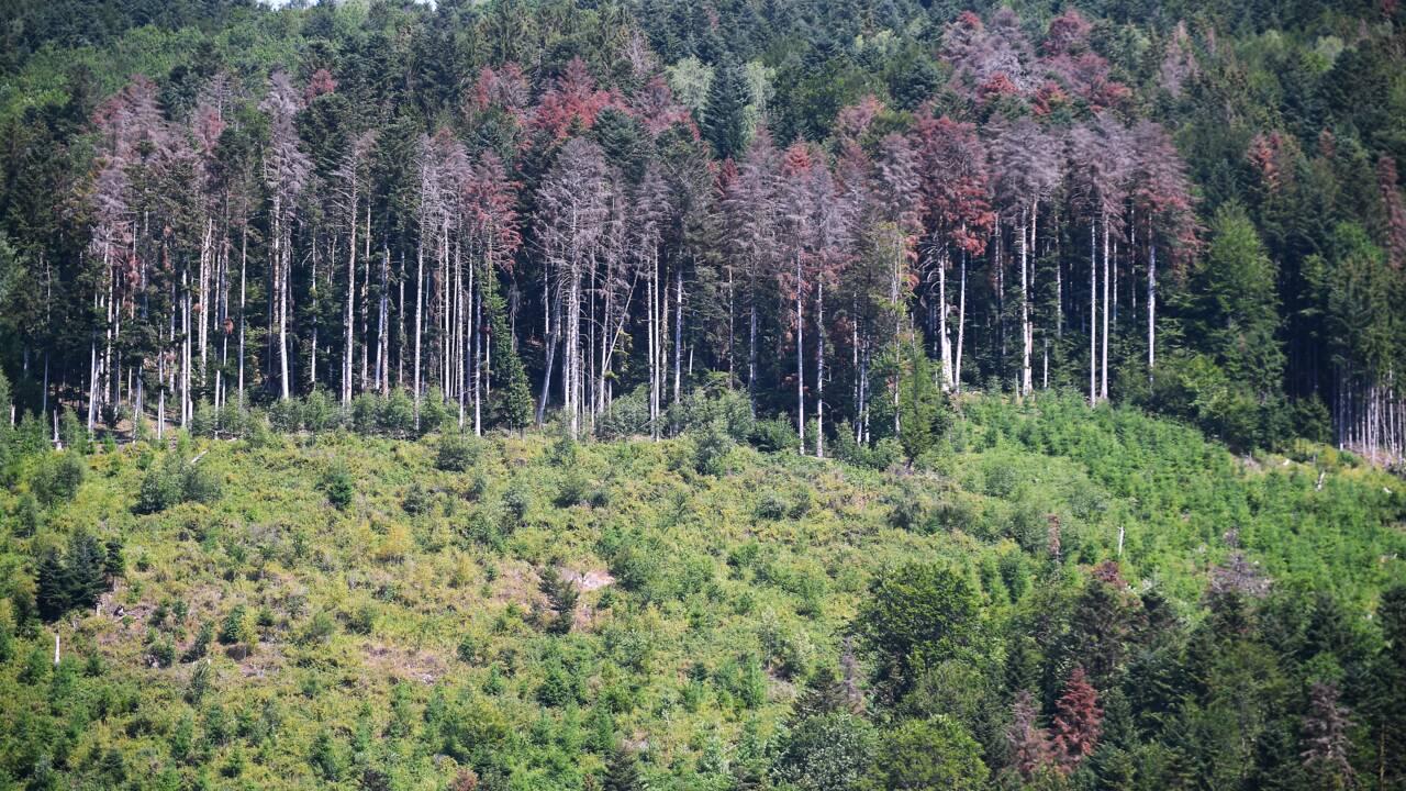 Manque de pluie et chaleur: une partie de l'Europe souffre de la sécheresse