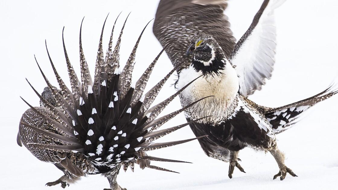 Les magnifiques photos d'oiseaux récompensées par les Audubon Photography Awards