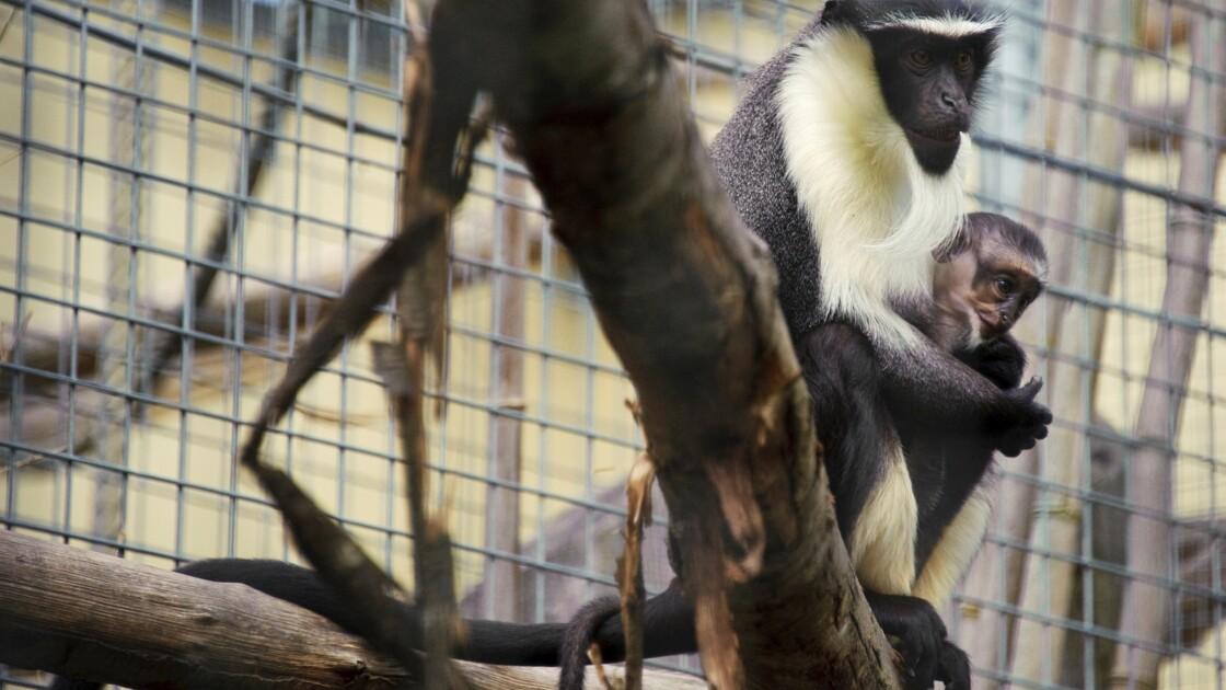 Animaux des abysses, primates ou champignons menacés par l'activité humaine