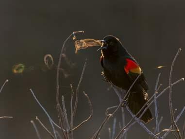 Audubon Photography Awards : les magnifiques photos d'oiseaux lauréates du concours