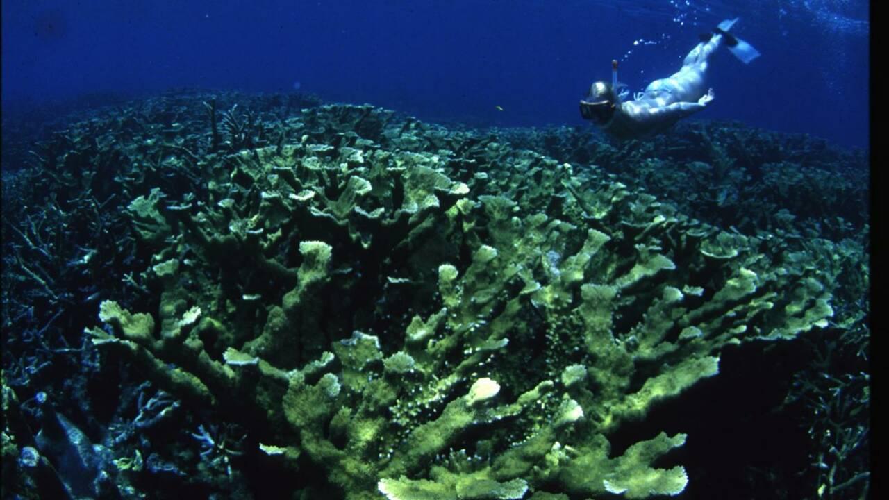 Le changement climatique n'est pas la seule menace responsable de la mort des coraux