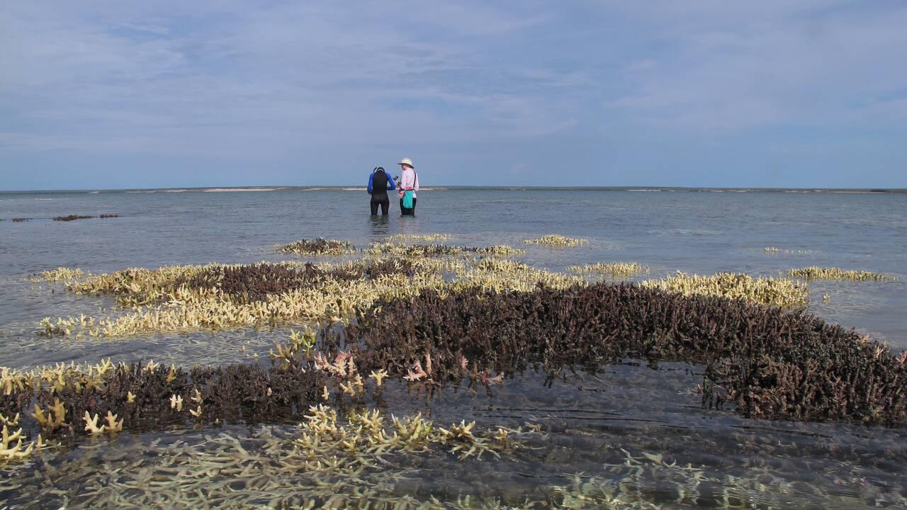 L'Autorité de la Grande barrière de corail veut des mesures contre le changement climatique