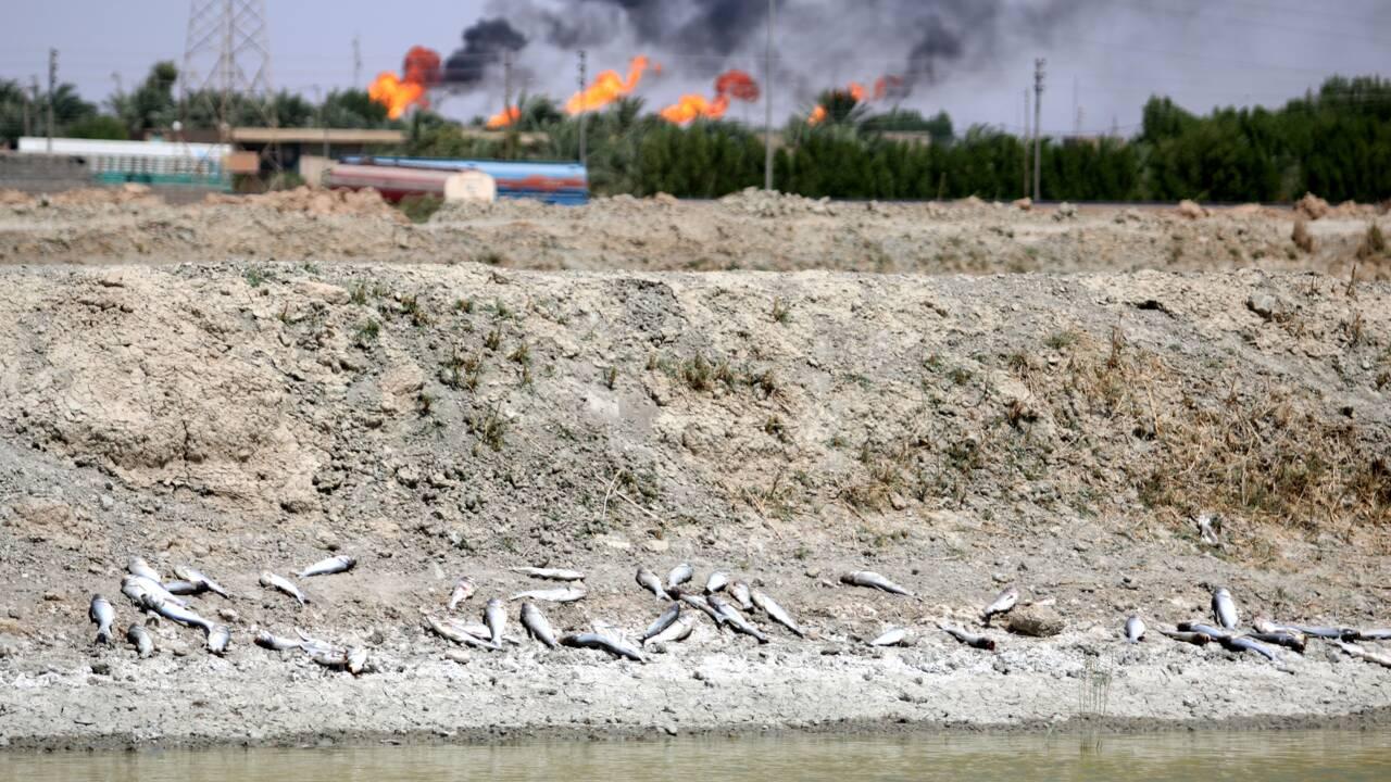"""Irak: Bassora risque de subir une nouvelle """"crise de l'eau"""", prévient HRW"""