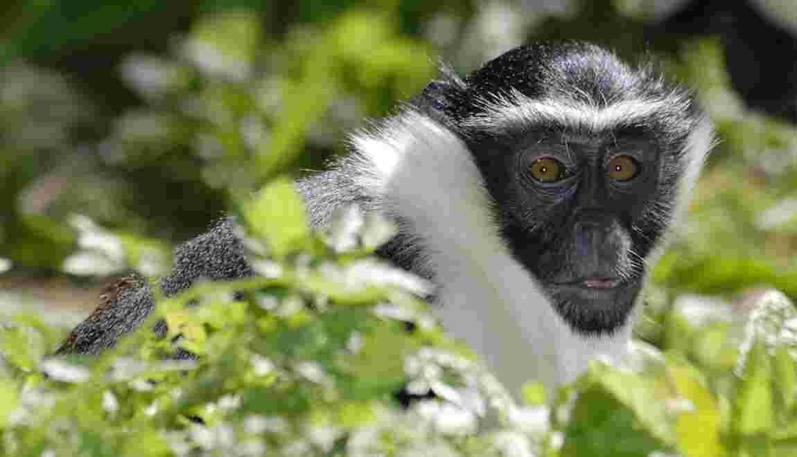 Plus de 28 000 espèces sont maintenant en danger d'extinction selon l'UICN