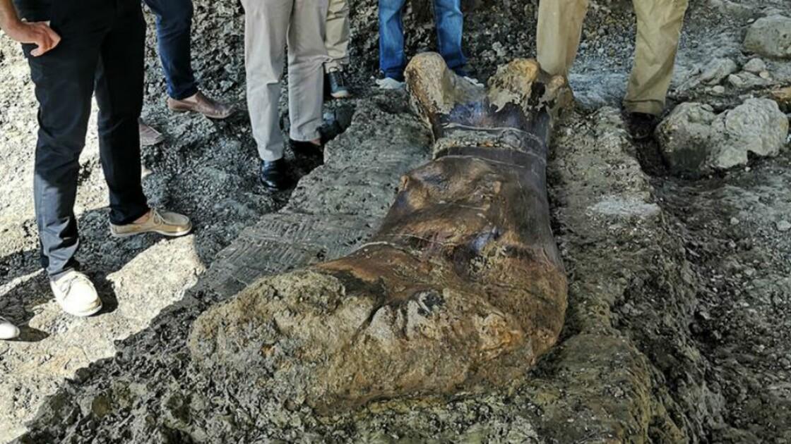 Un fémur de dinosaure géant long de 2 mètres exhumé sur le site paléontologique d'Angeac-Charente