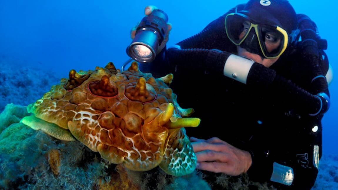 Des plongeurs mènent une expédition inédite pour révéler les secrets cachés de la Méditerranée
