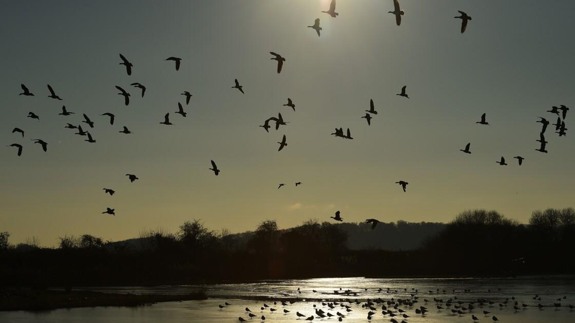 Oiseaux: la France avertie par l'UE sur les méthodes de chasse illégales