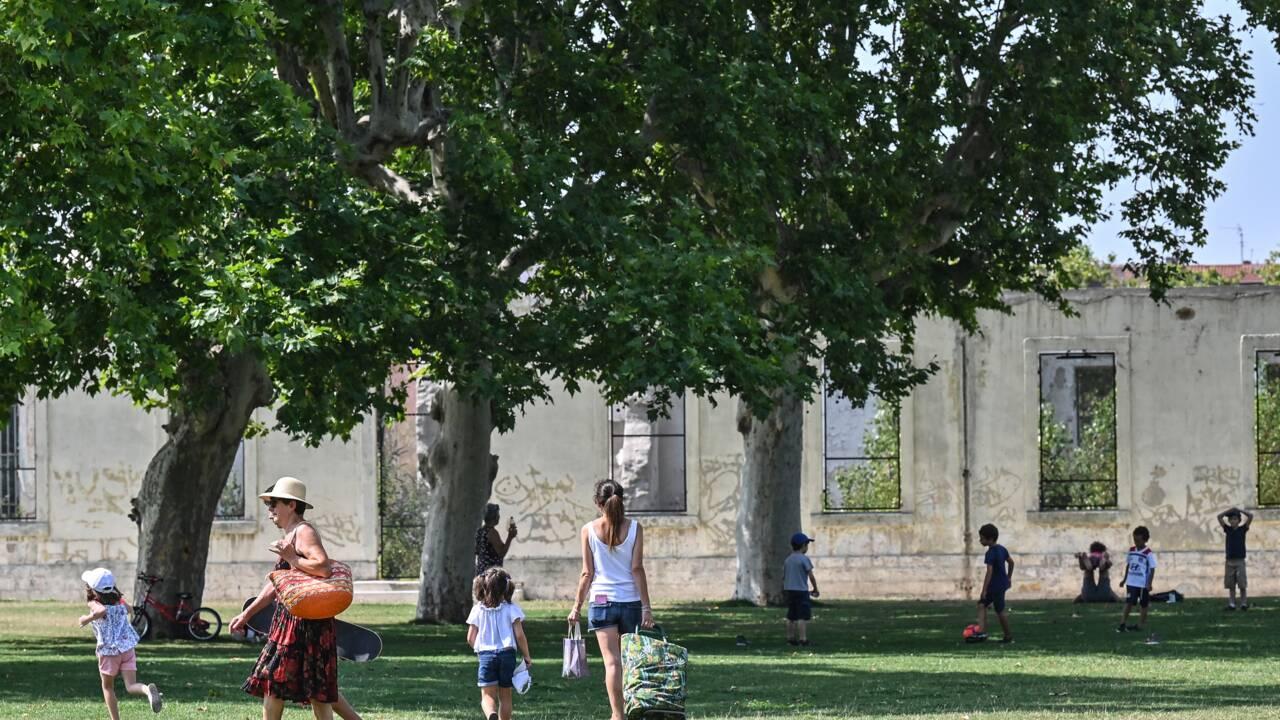 Adieu hêtres, épicéas ! Les jardins de Lyon à l'épreuve du dérèglement climatique