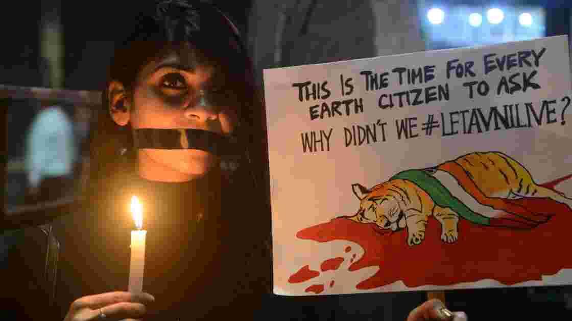 Inde: des villageois battent à mort la tigresse qui les avait attaqués